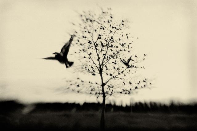 , 'Black Bird Fly,' 2008, Galerie Claude Samuel