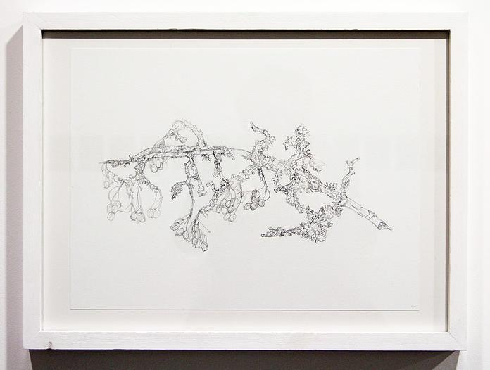 LEO Twig Study - Hawthorne III 2014 Pencil on paper 40 x 30 cm