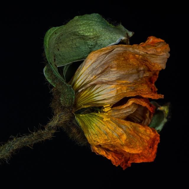 Kathrin Linkersdorff, 'Wabi Sabi I/5', 2014, Photography, Archival pigment print, Springer