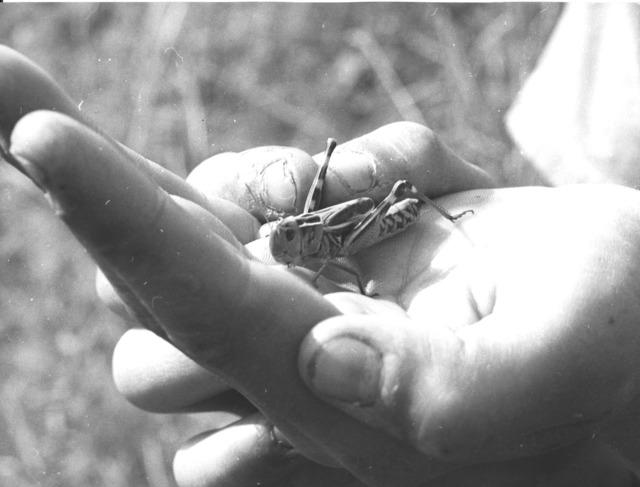 Robert Manson, 'Travaux des champs et animaux de la ferme', c. 1950, Photography, Groupe de 37 photographies, Punta della Dogana