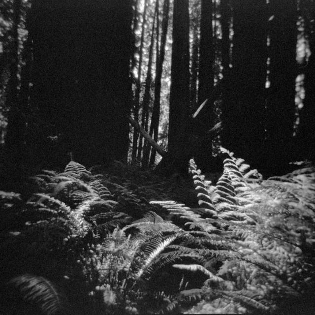 , 'Primal Wild 2,' 2014, Silo118