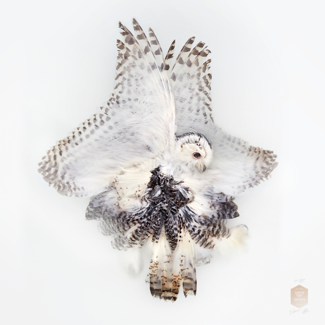 ", 'Snowy Owl, from the series ""Unknown Poses"",' 2016, Kahmann Gallery"