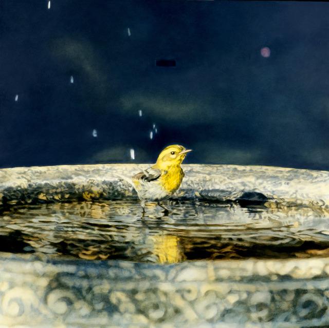 , 'Townsend Warbler in Bath,' 2013, Rena Bransten Gallery