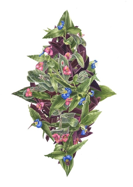 , 'Tradescantia bouquet,' , Jacaranda Images