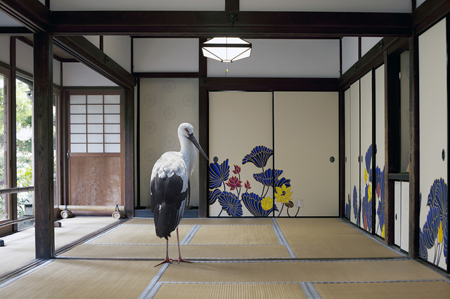 , 'Victory of the Spirit ,Sho-ren in Temple, Kyoto  ,' 2015, Galerie Les filles du calvaire