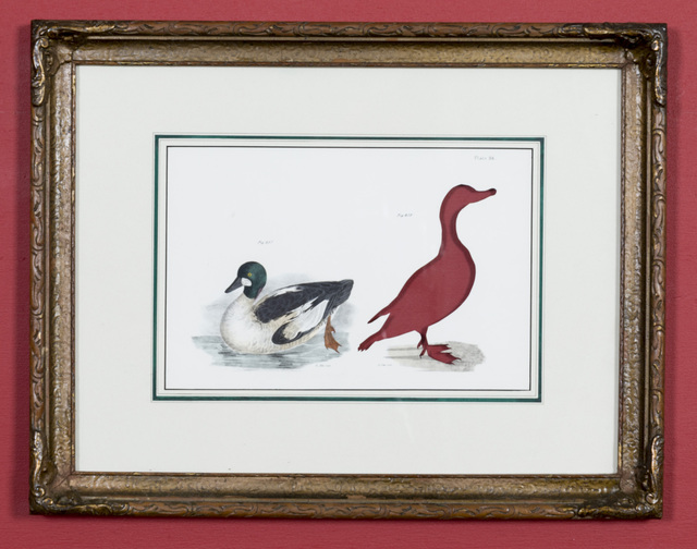Brandon Ballengée, 'RIP Labrador Duck: After John William Hill, 1844', 2015, Ronald Feldman Gallery