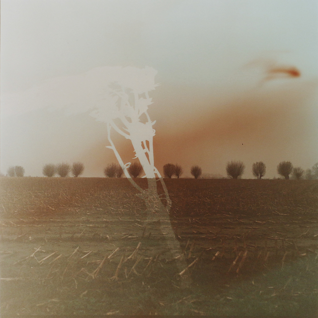 , 'Flanders Landscape (trees and branch),' 2014, Newzones