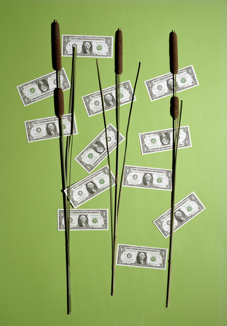, 'Money Tree,' 2015, Andrew Kreps