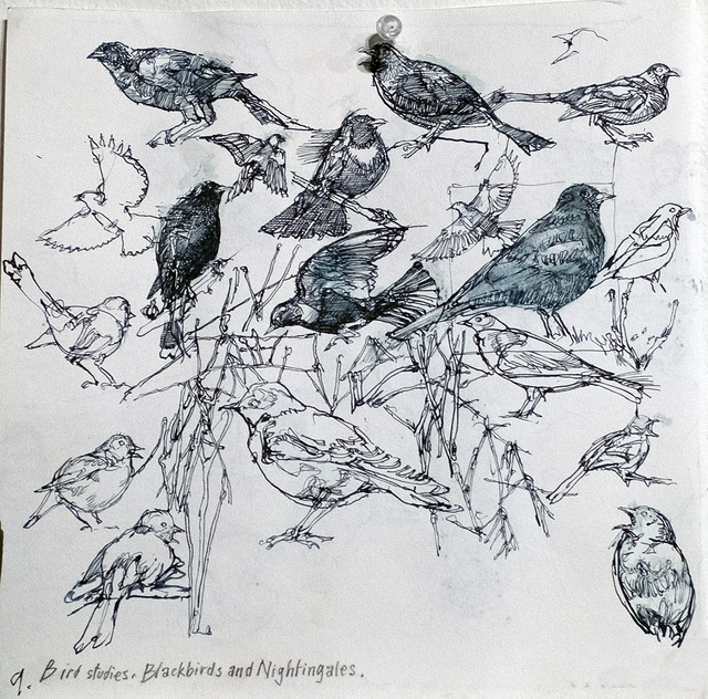 , 'Birds: Journal Sketch Pg. 9,' 2015, ANNO DOMINI