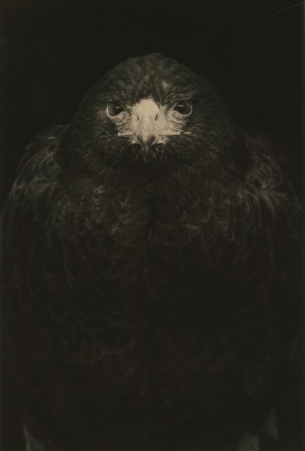 , '#1649,' , Craig Krull Gallery