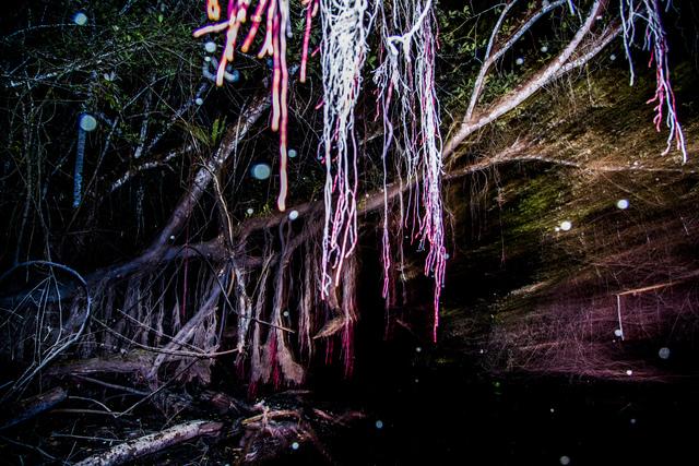 , 'Bosque anfibio ,' 2015, myl arte contemporáneo