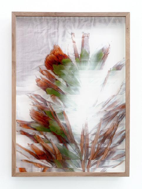 , 'Botanical Frottage - Maria (Oaxaca series),' 2017, PROYECTOSMONCLOVA