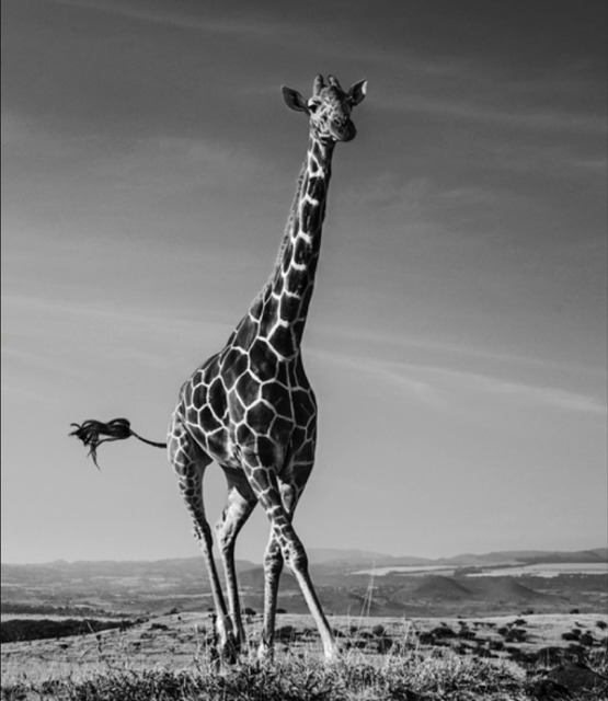 David Yarrow, 'Tiny Dancer', 2019, Hilton Asmus