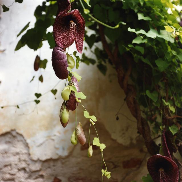 , 'Padua Botanical #12,' 2013, Newzones