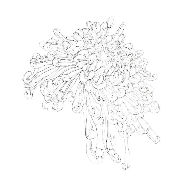 , 'Chrysanthemun,' 2019, iPreciation