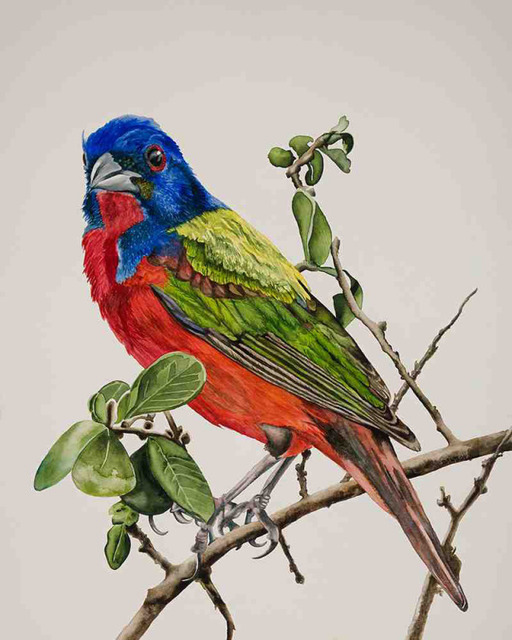 , 'Party Bird: Painted Bunting,' 2018, Wally Workman Gallery