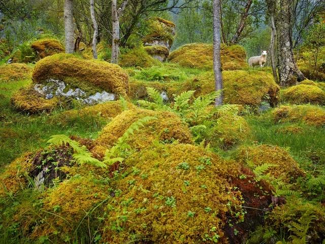 , 'Olaf, Lofoten Islands, Norway,' 2013, Burnet Fine Art & Advisory