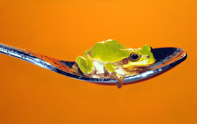 , 'Nothing.Life.Object (Frog on Spoon),' 2015, Plus One Gallery