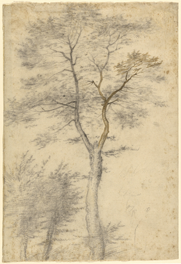 Baccio della Porta, called Fra Bartolommeo, 'Three Studies of Trees', 1508, Black chalk, point of brush and brown ink, J. Paul Getty Museum