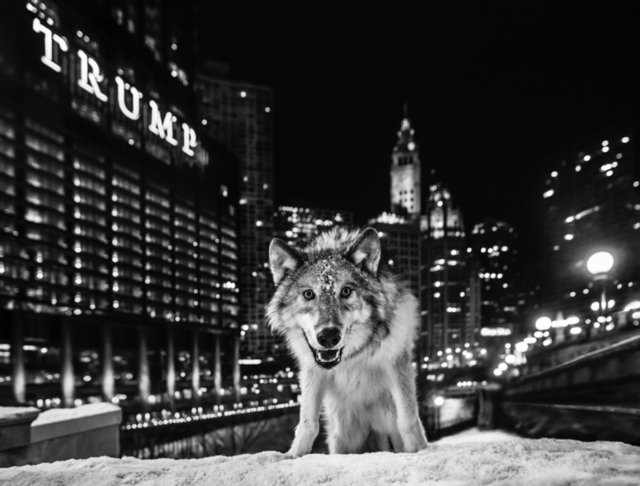 David Yarrow, 'It's Only a Matter of Time', Visions West Contemporary