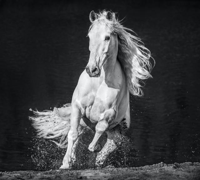 David Yarrow, 'Horsepower', 2020, Photography, Archival Pigment Print, Hilton Asmus