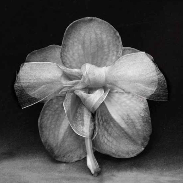 , 'Le dos à la peau soyeuse de Kikura,' 2011, Segolene Brossette Galerie