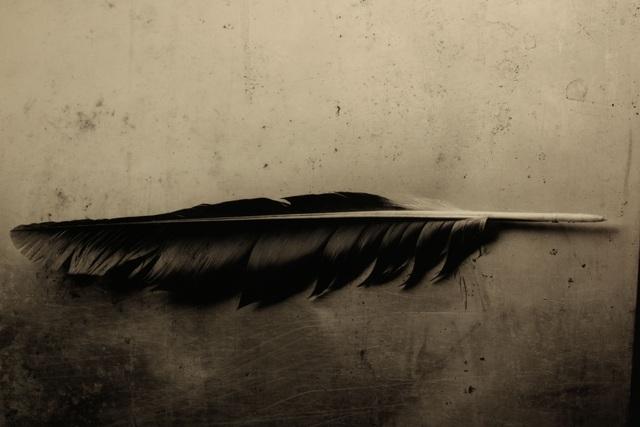 , 'Solve et Coagula, Corvus,' 2016, Galerija Fotografija