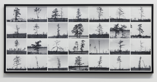 Nancy Holt, 'Pine Barrens: Trees', 1975, Photography, Composite inkjet print on archival rag paper, printed from video stills; printed 2012, Parafin
