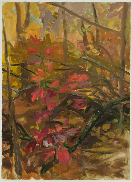 , 'Study for Red Maple,' 2012, Inman Gallery
