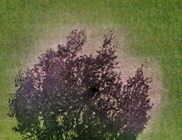 , 'Cherry Blossoms,' 2010, Thomas Rehbein Galerie