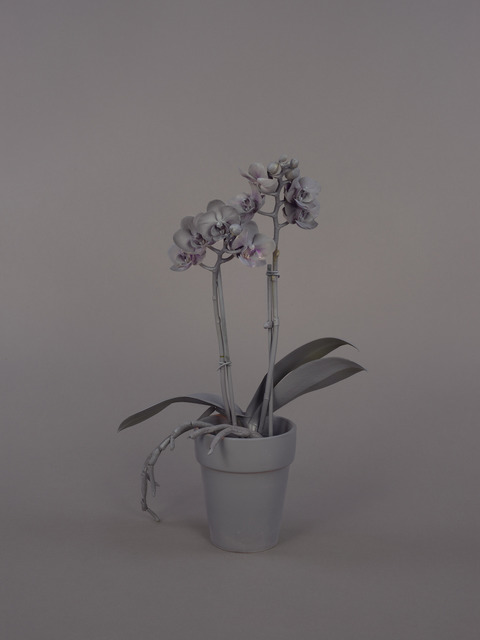 , 'Neutral Orchids (Phalaenopsis, small),' 2016, Catharine Clark Gallery
