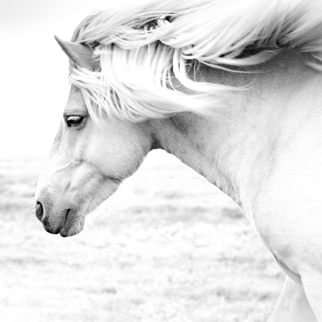 Anton Lyalin, 'Horses #8', 2001-2018, Sohn Fine Art