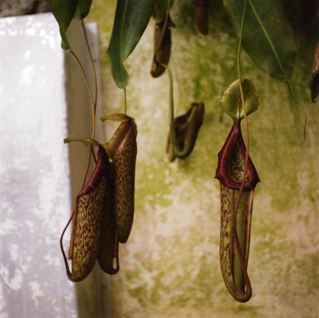 , 'Padua Botanical #3,' 2013, Newzones