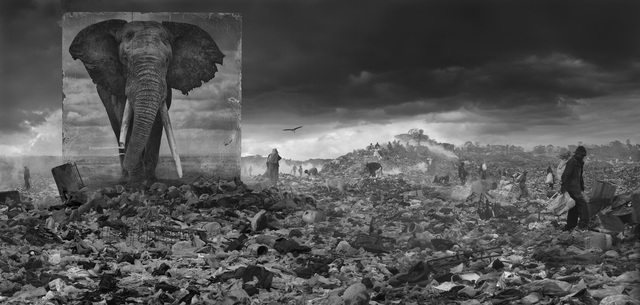 Nick Brandt, 'Wasteland with Elephant', 2015, Photography, Archival Pigment Photograph, Holden Luntz Gallery