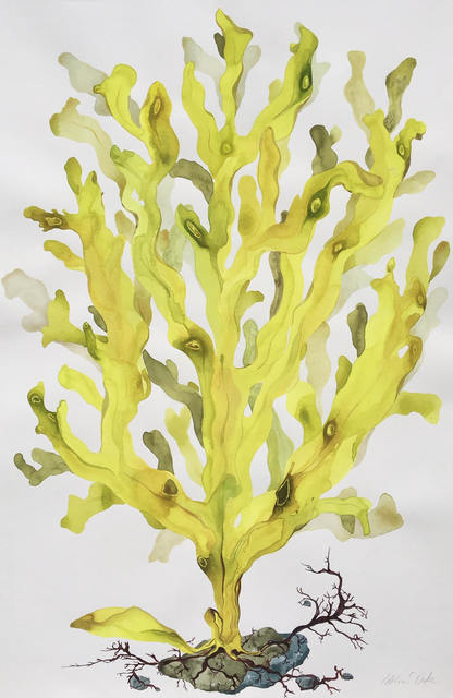 Idoline Duke, 'Yellow Seaweed II', 2019, ARC Fine Art LLC