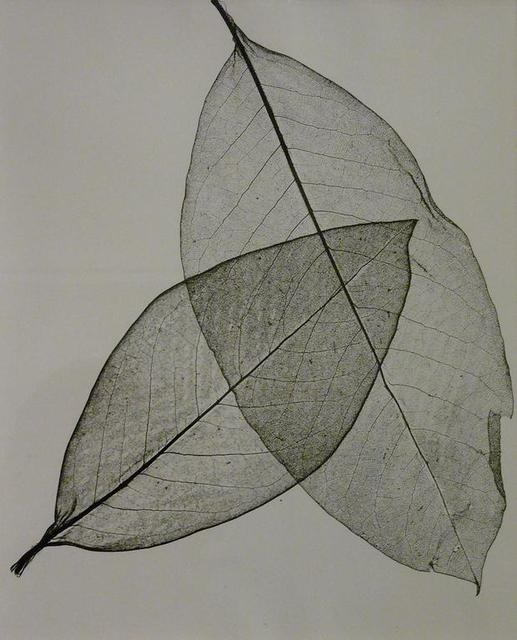 Herbert Matter, 'Two Transparent Leaves', 1945, James Barron Art