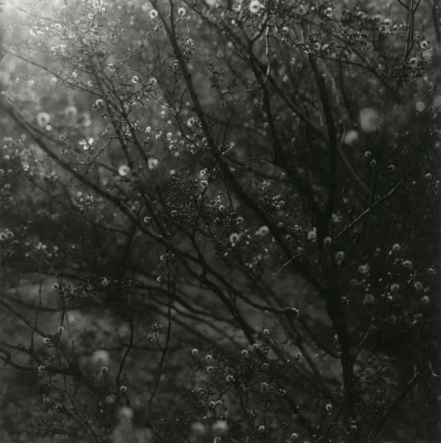 Ken Rosenthal, 'Illuminated', 2010, Photography, Split-Toned Gelatin Silver Print, photo-eye Gallery