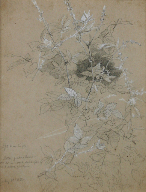 , 'Leaf Study,' 1858, Avery Galleries