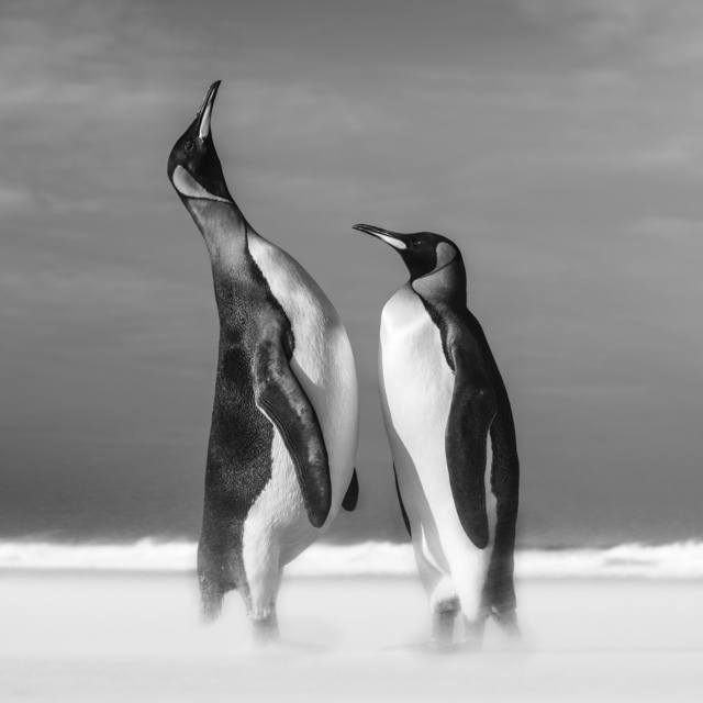 David Yarrow, 'All You Need Is Love', 2018, Photography, Archival pigment print on paper, Fineart Oslo