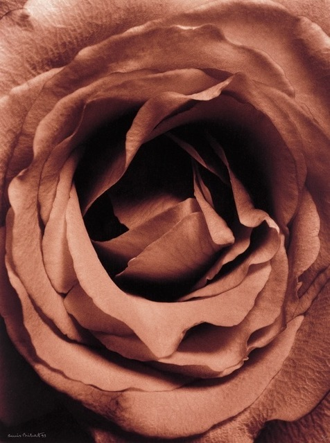 , 'Coeur de Rose,' 1994-printed 1995, Nailya Alexander Gallery