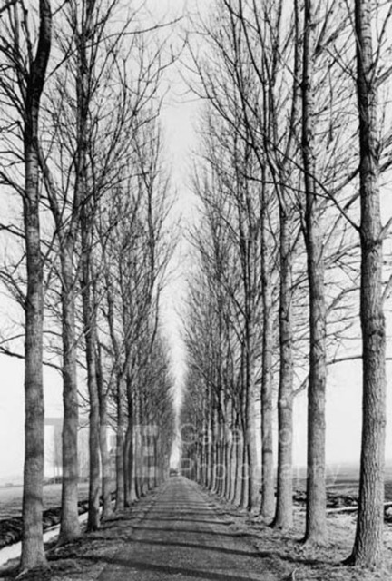 Alfred Eisenstaedt, 'Tree Lined Road, Delft, Holland', 1978, Contessa Gallery