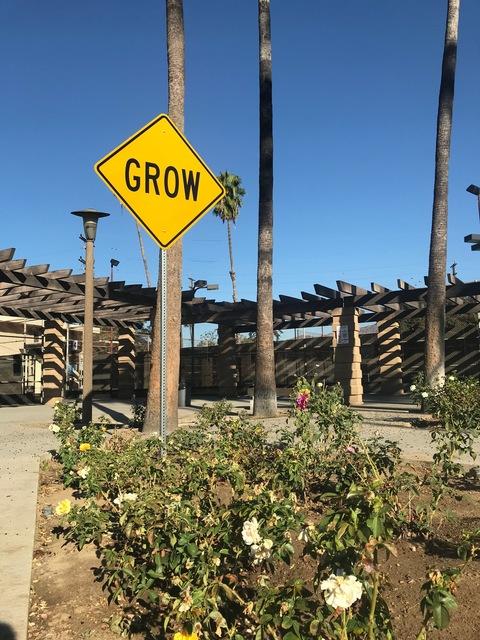 , 'Grow,' 2017, Wallspace