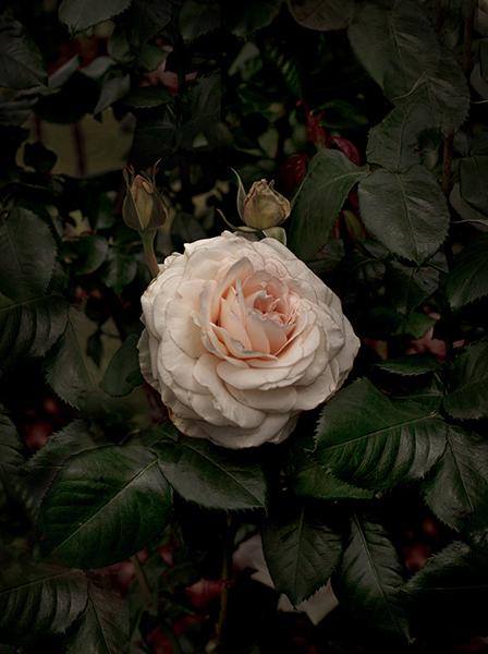 , 'Bloom #6,' 2018, MARS