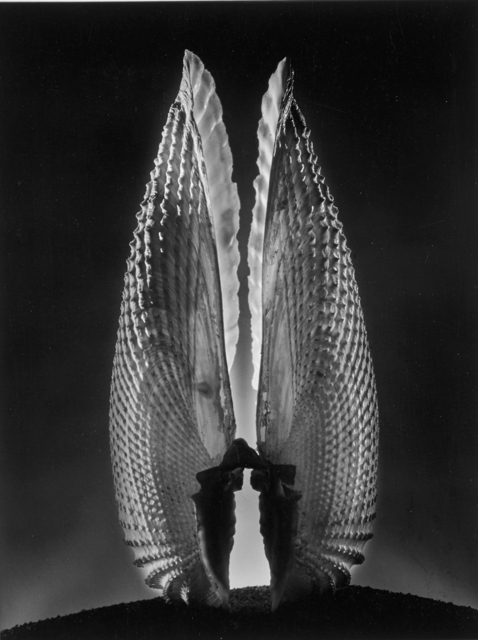 Ruth Bernhard, 'Angel Wings', 1943, Rago