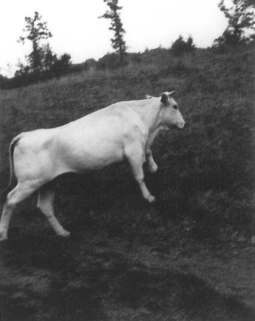 , 'White bull, Spain,' 2010, Robert Miller Gallery