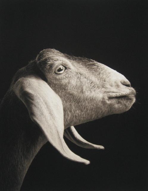 Kevin Horan, 'Xantippe #1', 2009, PDNB Gallery