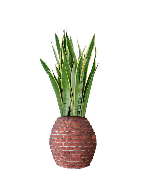 , 'Gonzalo Fernández de Oviedo y Valdés' Pineapple by Lowe's of Chelsea NY Store #3293,' 2018, PROXYCO