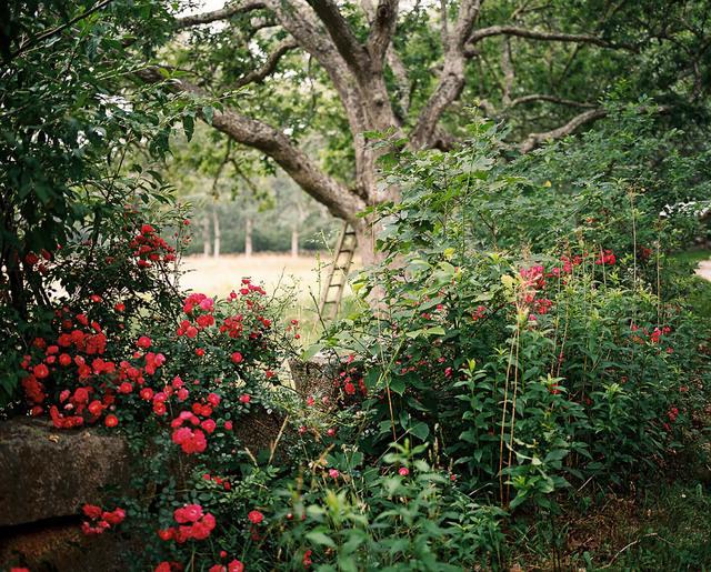 , 'Wild Roses,' 2014, ClampArt