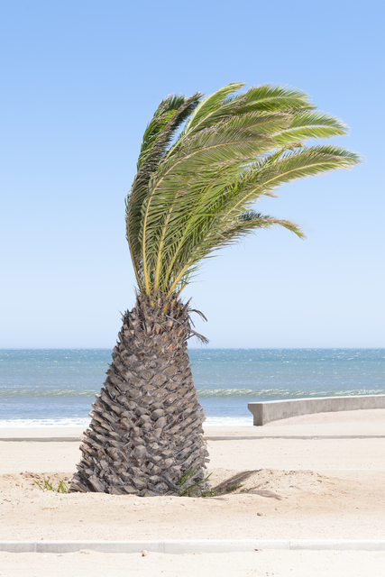 , 'Palm,' 2016, Mirko Mayer