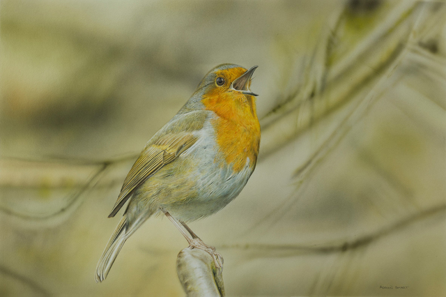 , 'Singing Robin,' , Plus One Gallery